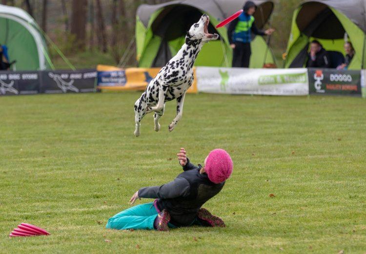 Ukázka freestylu v dogsfrisbee
