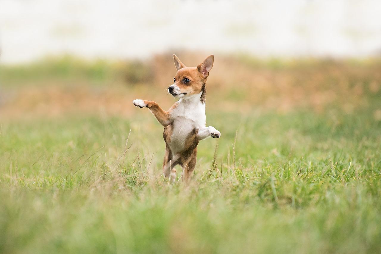 Proč psi jedí trávu a kdy je to špatně?